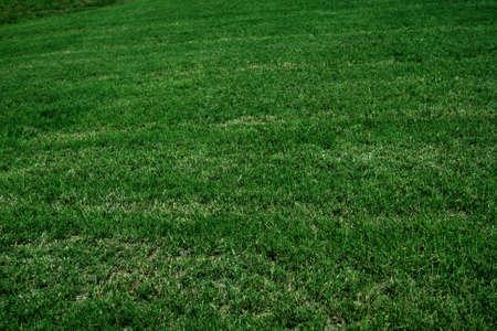緑豊かな緑の草 写真素材