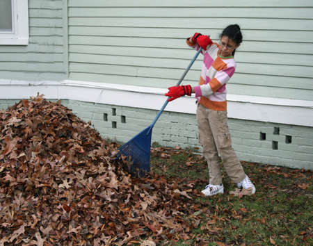 pile of leaves: girl raking leaves Stock Photo