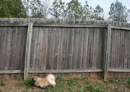 Dog beside old fence Zdjęcie Seryjne
