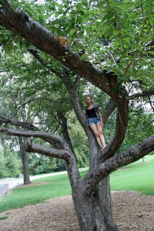 Massive Southern Magnolia tree Zdjęcie Seryjne