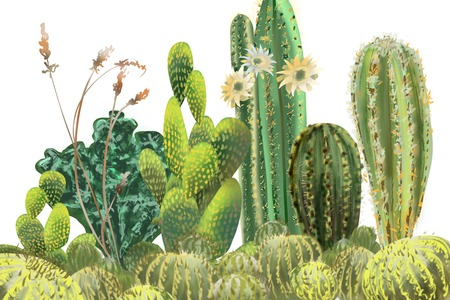 Cactus horizontal grouping hand drawn original painted artwork border background on white backdrop for realistic unique design use