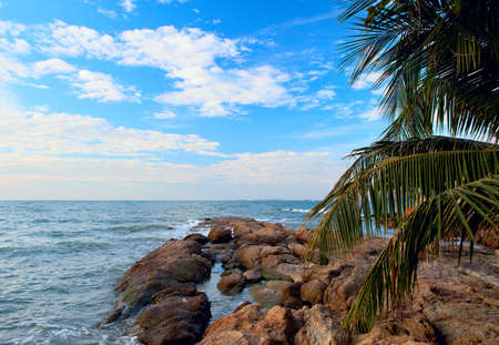 Stones on the sea and palm tree