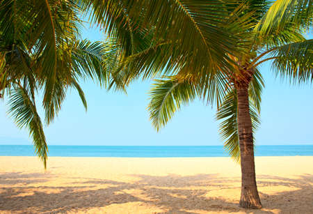 Palm trees on the beach photo