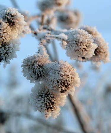 Frost sulle piante