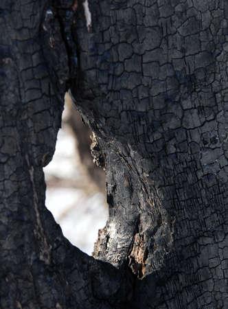 Hole in burned tree
