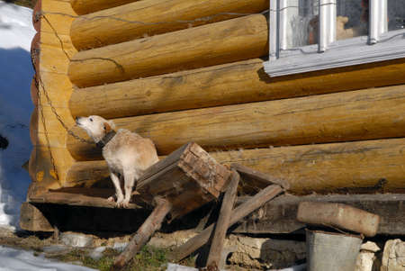 Dog protecting home photo