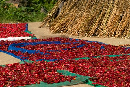 Process of dying red hot pepper at sunny place