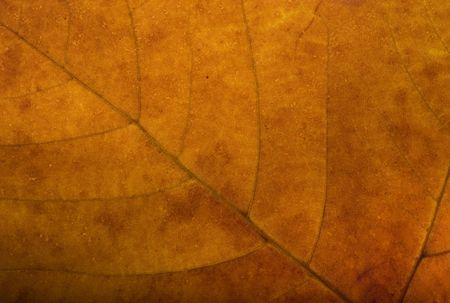 Autumn background composed from closeup of brown maple leaf
