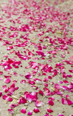 Rose petals laying at the ground after wedding ceremony