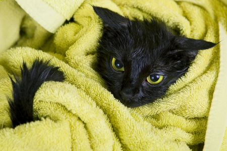 Cute black soggy cat after a bath Stockfoto