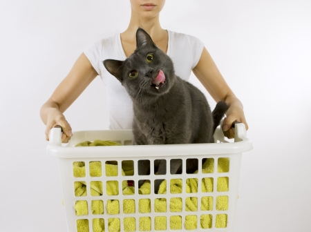 overburden: Funny cat wash - cat in white plastic basket with colorful laundry to wash