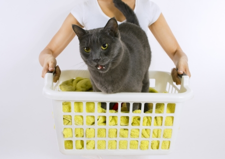 purify: Funny cat wash - cat in white plastic basket with colorful laundry to wash