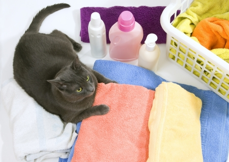 clean clothes: Funny cat on colorful laundry to wash