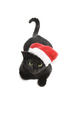 Funny Black Cat Santa - Cute christmas cat photo