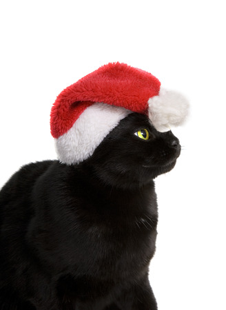 Funny Black Cat Santa - Cute christmas cat Stock Photo - 24470314