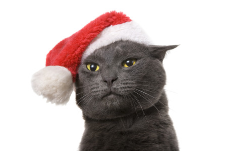 Funny Gray Cat Santa - Cute christmas cat, isolated on white background Banque d'images