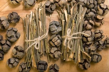salix alba: White willow bark medical herb, used in herbal medicine. Salix alba