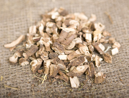 chicory: Dried natural wild chicory (dry medicinal herbs)