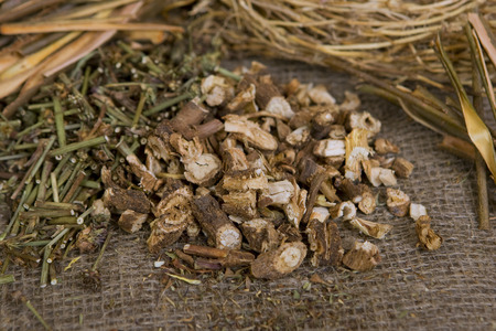 licorice: Dried natural wild chicory (dry medicinal herbs)
