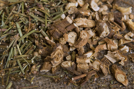 Dried natural wild chicory (dry medicinal herbs) photo