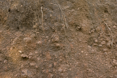 chiseled: Sand Rock texture with roots. brown background