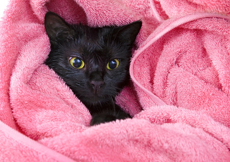 wee: Cute black soggy cat after a bath Stock Photo