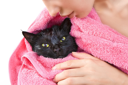 Woman holding Cute black soggy cat after a bath, drying off with a towel after bath  photo