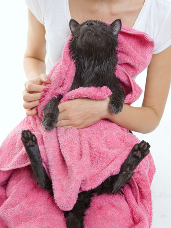 Woman holding Cute gray soggy cat after a bath, drying off with a pink towel photo