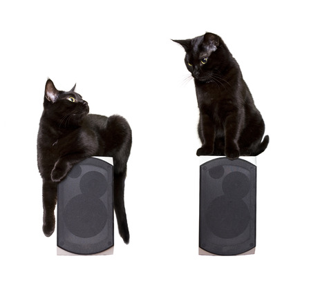bluray: Family pet (Black cute cat) sitting on the speaker and listening music, two cats Isolated on white