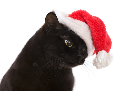 Funny Black Cat Santa - Cute christmas cat, Christmas pet with Santa Claus hat photo