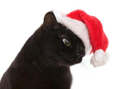 Funny Black Cat Santa - Cute christmas cat, Christmas pet with Santa Claus hat