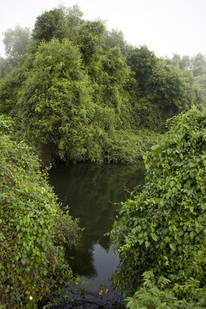 thickets: Deep Forest, Lush Tropical Rainforest and river in North India, Thickets. Calm Forest Landscape