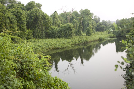 thickets: Deep Forest, Lush Tropical Rainforest in North India, Thickets. Calm Forest Landscape