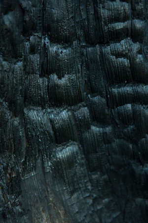 burnt wood: Blurred Burnt Wood Texture. Dark Abstract Wooden Background. A Tree Stump in the Forest Stock Photo