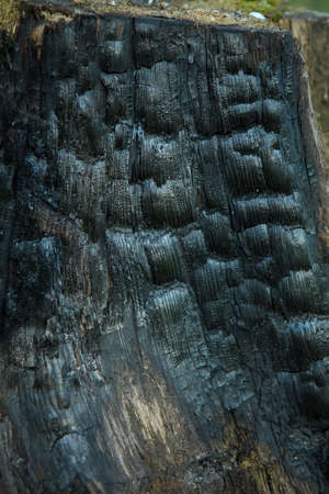 burnt wood: Burnt Wood Texture. Dark Abstract Wooden Background. A Tree Stump in the Forest Stock Photo