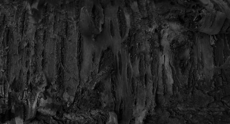 Dark Abstract dramatic Wooden Background. Burnt Wood Texture. A Tree bark in the Forest. black and white