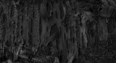 Résumé Contexte bois dramatique foncé. Burnt Wood Texture. Une écorce des arbres dans la forêt. noir et blanc Banque d'images