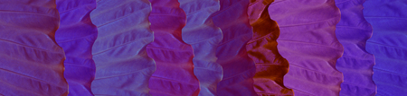 Skinali. Purple, lilac and blue tropical leaves. Eco concept. Jungle background. Big colorful leaves of tropical plants. banner 版權商用圖片