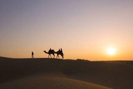 Silhouette of camels in the desert on a sunset background. Thar Desert in Jaisalmer, Rajasthan, India.