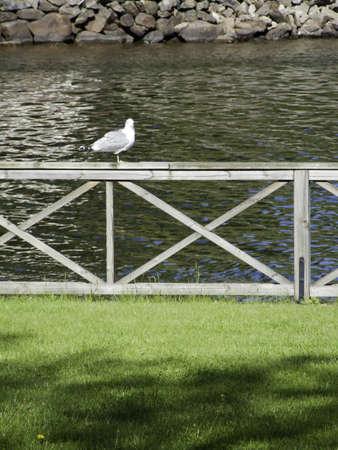 alight: A gull alight on a fence near a lake