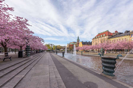 meeting place: The famous meeting place Kungstradgarden in Stockholm with cherry trees in blossom