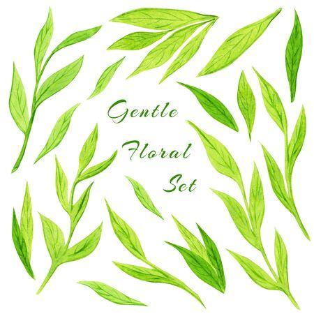 Reihe von grünen Wildpflanzen. Blätter, Zweige und natürliche Elemente. Botanische Sammlung
