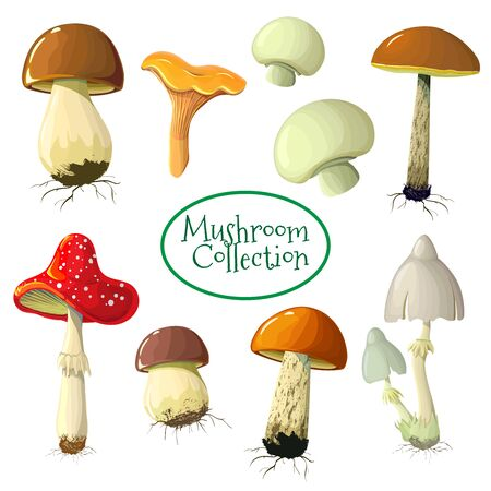 Edible mushrooms set Isolated on white. Vector illustration of different types of mushrooms, such as Champignon, Chanterelle, Porcini, Toadstool Fly-mushroom in trendy style. game cartoon mushroom.