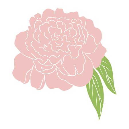 vector Simple pink peony flower. colored sketch of flower. Hand drawn outline illustration of flowering peony. Graphic vector peony isolated on white backdrop peony hand drawn Flat floral illustration