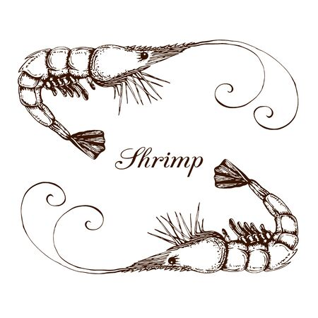 Hand drawn engraved ink shrimp or prawn illustration isolated on white. etched seafood graphic.Outline sketch of realistic shrimp. vector shrimps prawns collection in vintage style. prawn line drawing