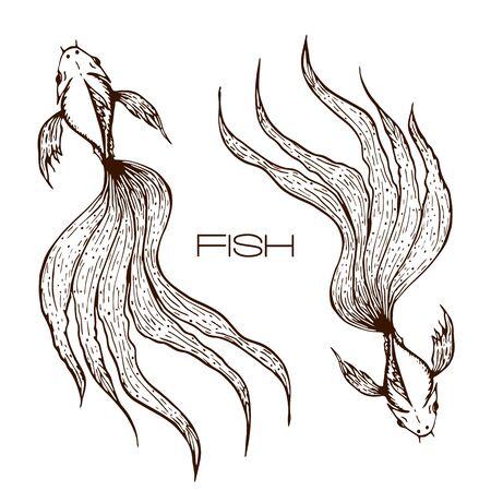 Dibujado a mano decorativo koi o betta o ilustración de peces de colores. gráfico de peces de línea esbozada. concepto de dos peces de cola larga ondulada en blanco. Ilustración de vector