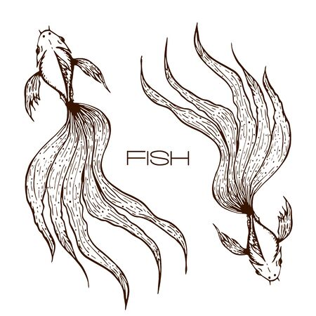 illustrazione decorativa disegnata a mano di koi o betta o pesce rosso. grafica di pesce linea abbozzata. due lunghi pesci dalla coda ondulata concetto su bianco. Vettoriali