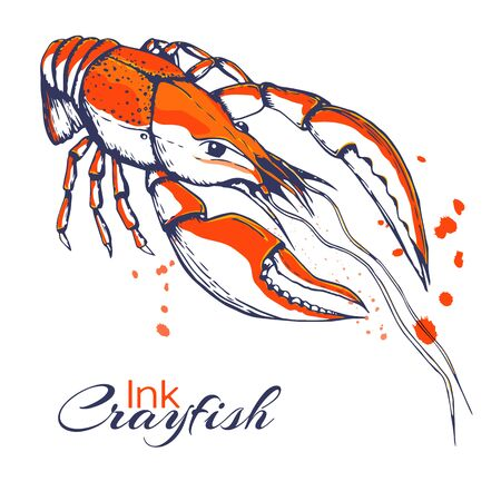 ink hand drawn crayfish concept for decoration or design. Ink spattered crawfish illustration. red boiled lobster drawn in ink. seafood concept with color splashes on white with place for text