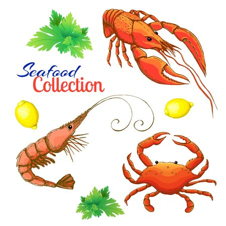 decorative seafood set. realistic sketched prawn or shrimp, lobster, crayfish and crab with lemon and bunch of parsley. cartoon vintage prawn, crawfish and crab. Bright shrimp, lobster and crab