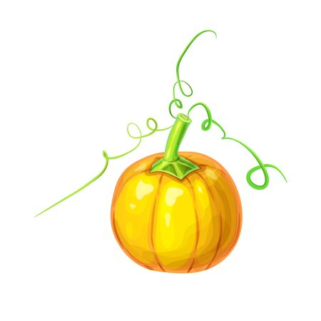 realistic Orange ripe pumpkin with stem and curly tendrils isolated on white. beautiful hand drawn autumn halloween or thanksgiving pumpkin. Bright detailed pumpkin in cartoon style Ilustração